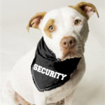 Will Your Dogs Prevent a Home Robbery?